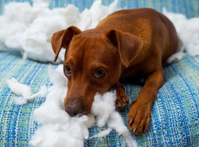 Destructiveness, Chewing, Separation Anxiety